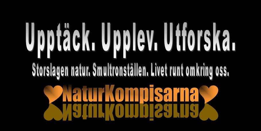 Titelbild NaturKompisarna - Upptäck